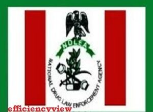Photo of NDLEA Applicant Register Login Portal | how to sign up/login to create account successfully – www.emplug.com